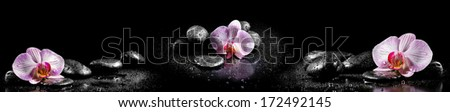 Horizontal panorama with pink orchids and zen stones on black background - stock photo