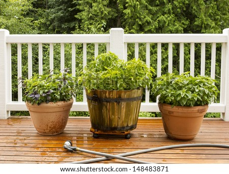 Horizontal photo of a home herb garden, with watering hose in front of pots on cedar deck with white railings and trees in background - stock photo