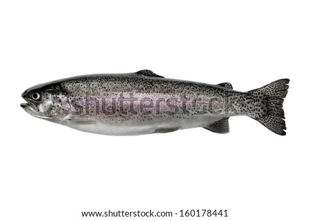 Horizontal photo of a wild rainbow trout, in pristine condition isolated on a white background