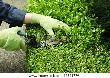 Horizontal photo of hands, wearing gloves, trimming hedges with manual shears  - stock photo