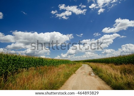 Horizontal photo of old broken path from sand and stones with puddles which goes between two fields with big high corn. The sky above is nicely dark blue with many clouds.
