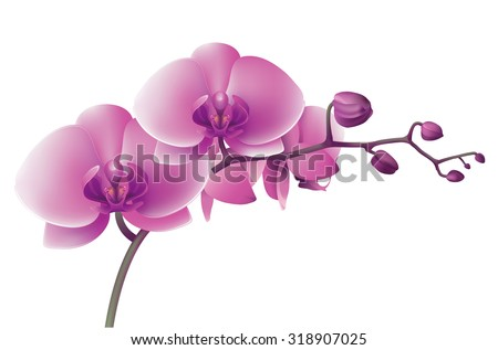 Horizontal photo realistic illustration of pink orchid. - stock photo
