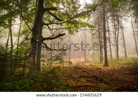 Horizontal shot of a scary, fairytale-like autumn forest covered in fog - stock photo