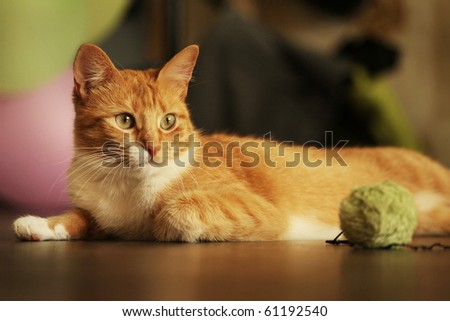 horizontal shot of cute red cat lying on the floor - stock photo