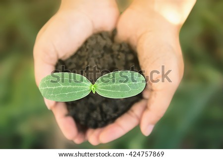 Horizontal shot of female hands gently holding young plants getting ready to plant them. - stock photo