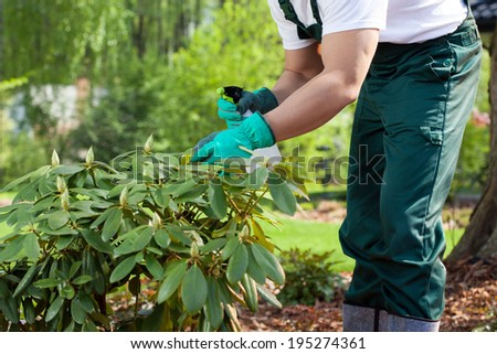 Horizontal view of a gardener spraying a plant - stock photo
