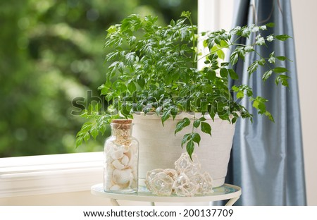 Horizontal view of home plant with decorations on small table next to open window with daylight coming through and blurred out trees in background  - stock photo