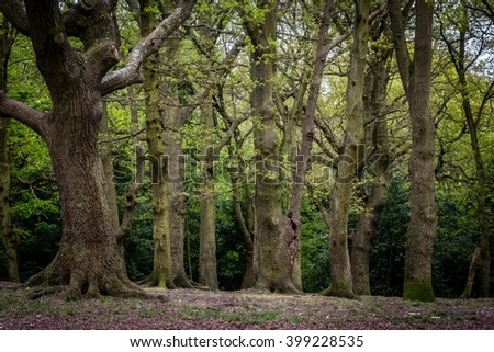 Horizontal view of the forest in England
