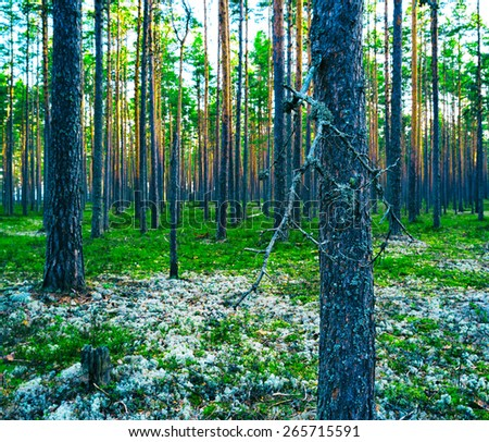 Horizontal vivid vibrant green forest vertical composition background backdrop - stock photo