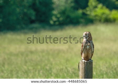 Horned owl sitting on a wooden post on a green field - stock photo