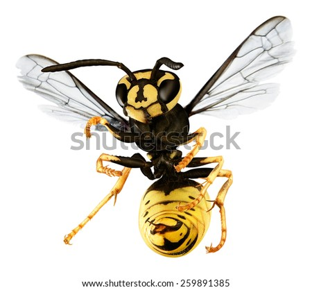 hornet isolated on white - stock photo