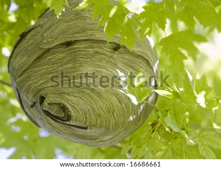 Hornet Nest - stock photo