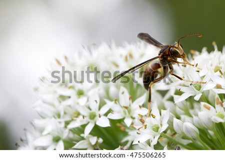 hornet on the flower
