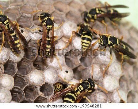 hornet's nest with wasps - stock photo