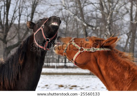horny joke - stock photo