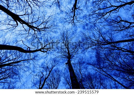 horror forest at night with a directly below perspective - stock photo