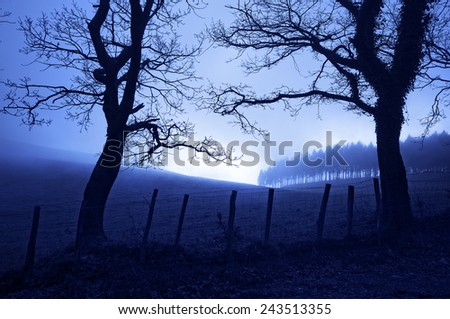 horror landscape at night with creepy trees and fog - stock photo