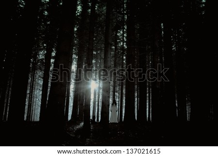 Horror scene of a scary woman - apparition of the female ghost in the deep spooky forest - stock photo