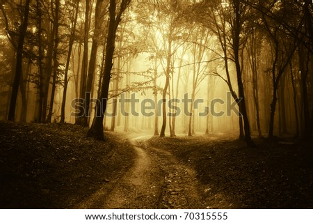 horror scene with a road through golden forest with dark trees - stock photo