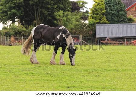 horse - stock photo