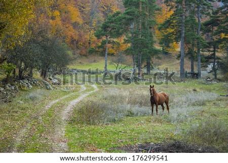 Horse alone - stock photo
