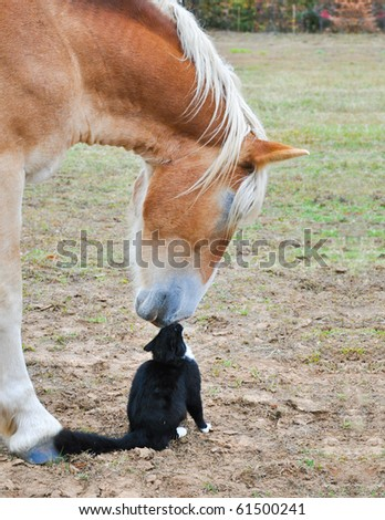 Horse and a tiny cat - good friends nose to nose