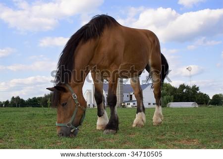 Horse and Amish Farm - stock photo