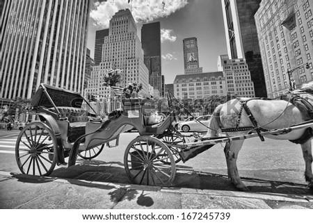 Horse and carriage at Central Park on a beautiful summer day, New York City, USA. - stock photo