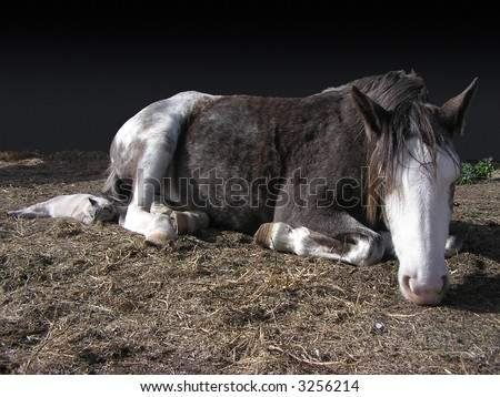 Horse and cat sleeping together - stock photo