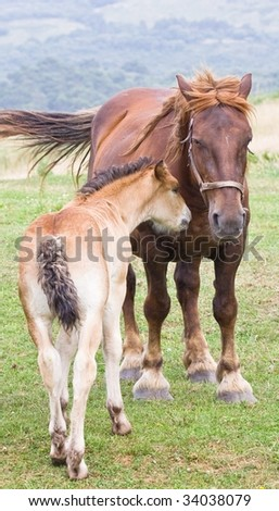 Horse and colt in affectionate attitude - stock photo