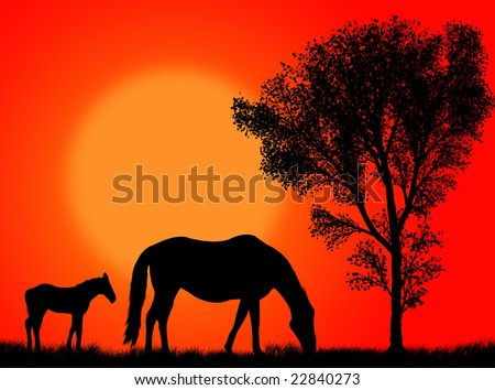 Horse and colt pasturing against a colorful sunset - stock photo