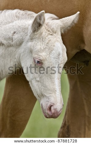 Horse and colt Saskatchewan Canada - stock photo