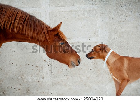 horse and dog communicating - stock photo