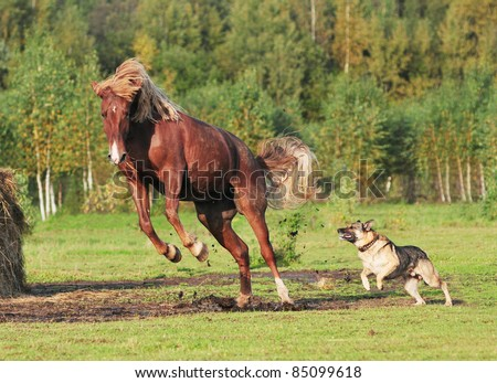 horse and dog play together - stock photo