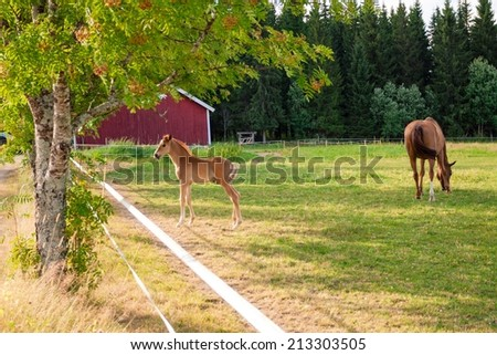 Horse and foal grazing in a pasture in a horse farm - stock photo