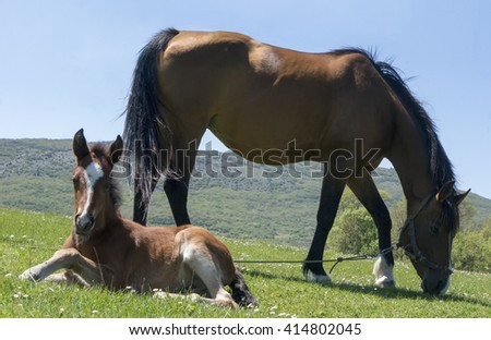 Horse and foal grazing in an alpine meadow in the mountains - stock photo