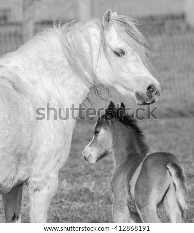 horse and foal in mono
