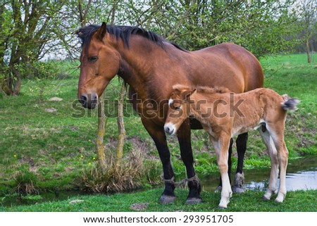 Horse and foal on pasture in the village