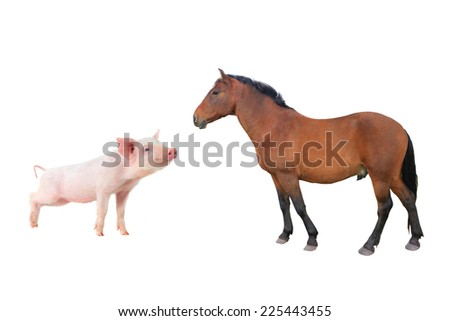 horse and pig isolated on white - stock photo
