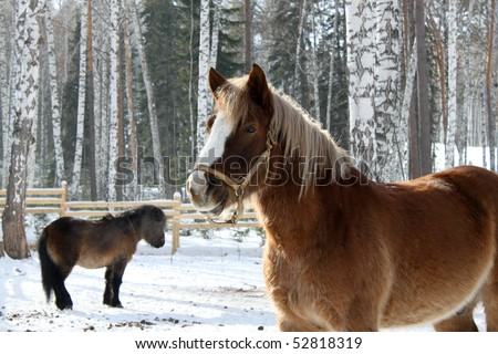 Horse and pony in winter on snow - stock photo