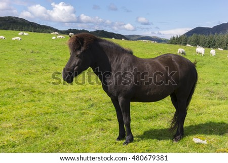horse and sheep in a pasture in Norway