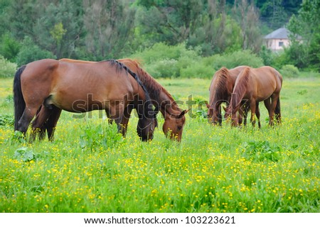 Horse are on a pasture