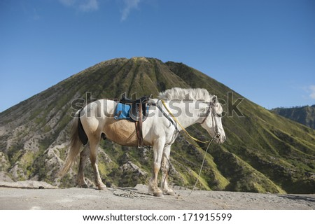 Horse at bromo volcano, Indonesia - stock photo