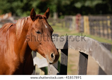 Horse at Fence. Horizontal format. - stock photo