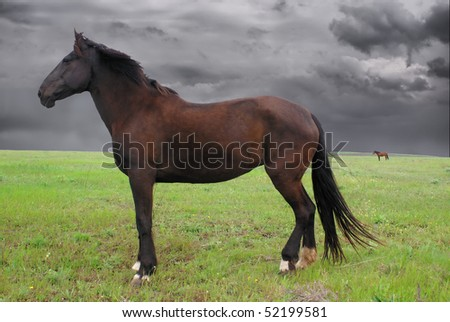 Horse at meadow