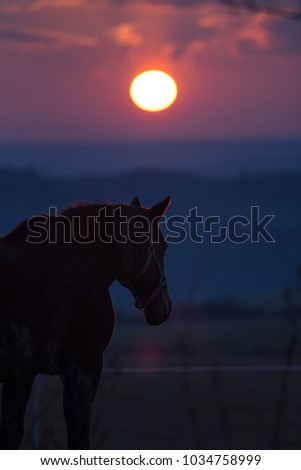 Horse at sunset.