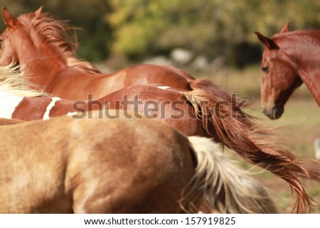 Horse Backs - stock photo