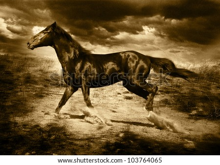 horse bay running on freedom across the field lifting clubs of a dust it is stylized semi-antique in a sepiya and large grain on a film - stock photo