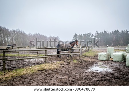Horse behind a fence on a muddy field at a farm - stock photo