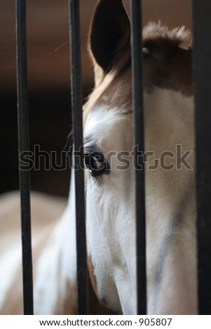 Horse behind bars in his stall
